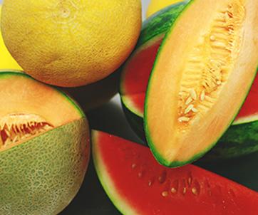 Fresh Produce Melons